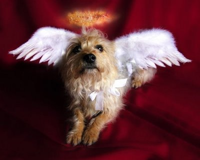 Dog Soul