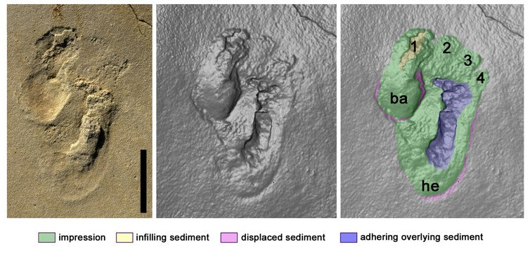 5.7 Million Year old Footprints