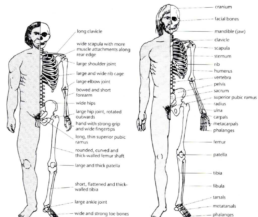 Neanderthal an Cro-Magdon