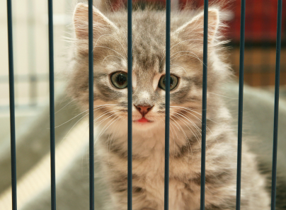 Kitten in Kennel